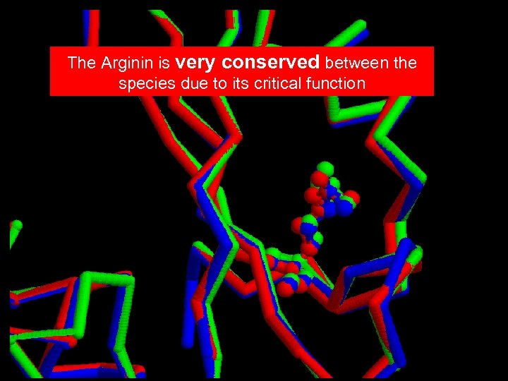 The Arginin is very conserved between the species due to its critical function