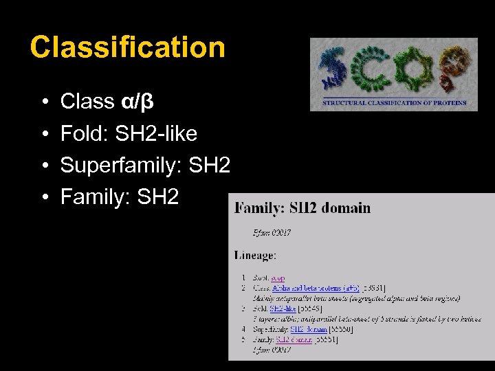 Classification • • Class α/β Fold: SH 2 -like Superfamily: SH 2 Family: SH
