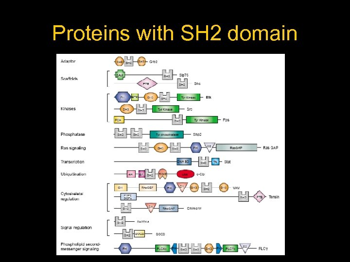 Proteins with SH 2 domain