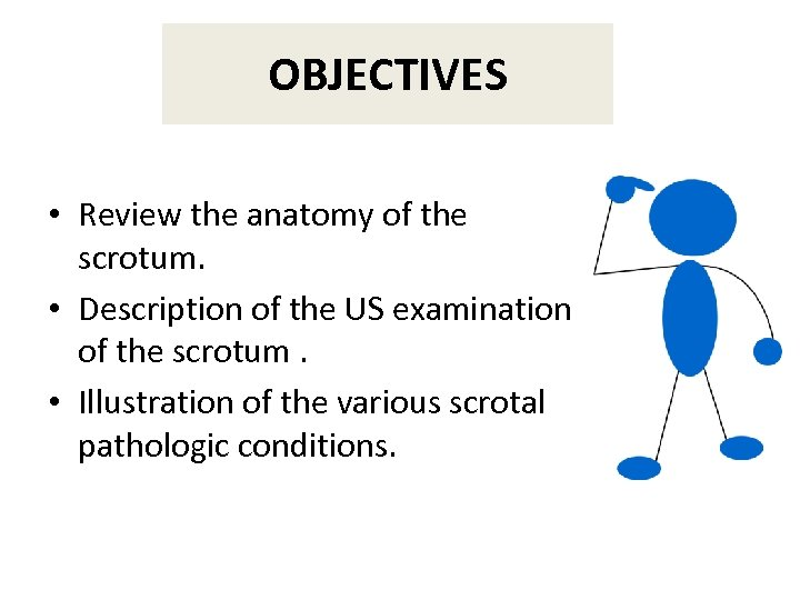 OBJECTIVES • Review the anatomy of the scrotum. • Description of the US examination