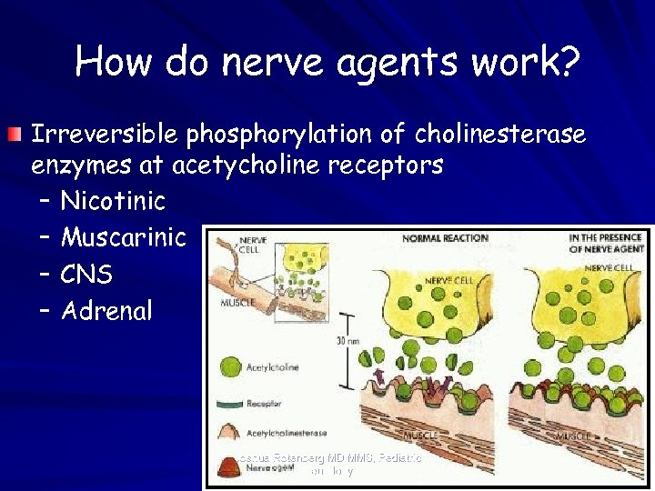 How do nerve agents work? Irreversible phosphorylation of cholinesterase enzymes at acetycholine receptors –