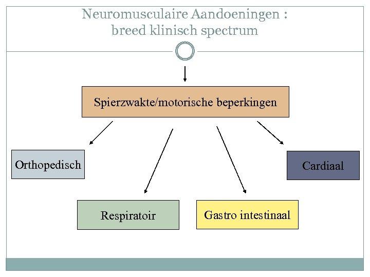 Neuromusculaire Aandoeningen : breed klinisch spectrum Spierzwakte/motorische beperkingen Orthopedisch Cardiaal Respiratoir Gastro intestinaal