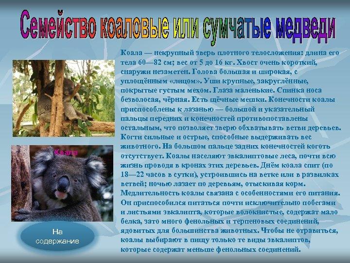 Коала На содержание Коала — некрупный зверь плотного телосложения: длина его тела 60— 82