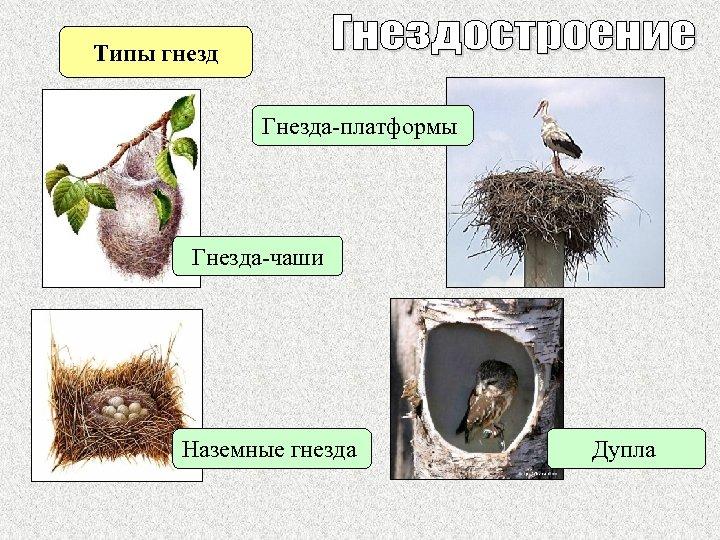 Типы гнезд Гнезда-платформы Гнезда-чаши Наземные гнезда Дупла