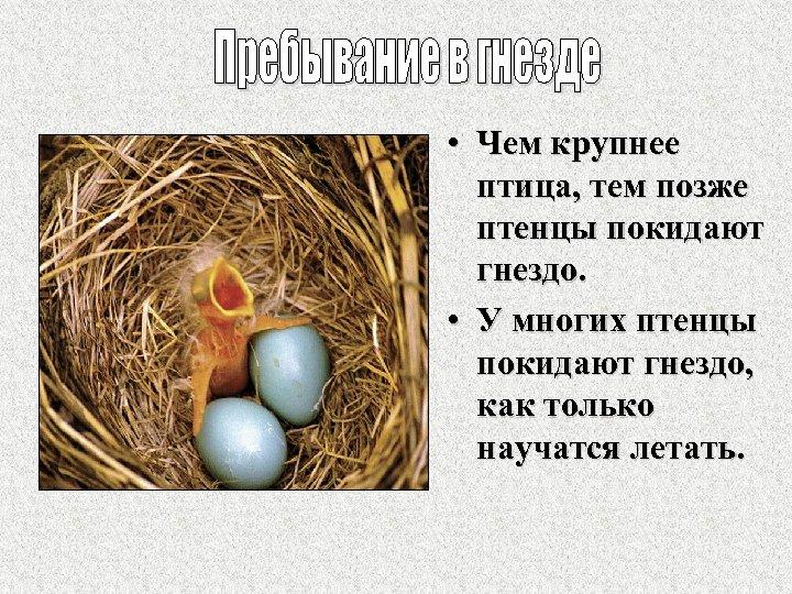 • Чем крупнее птица, тем позже птенцы покидают гнездо. • У многих птенцы