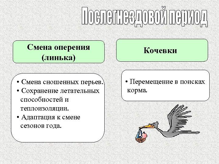 Смена оперения (линька) • Смена сношенных перьев. • Сохранение летательных способностей и теплоизоляции. •