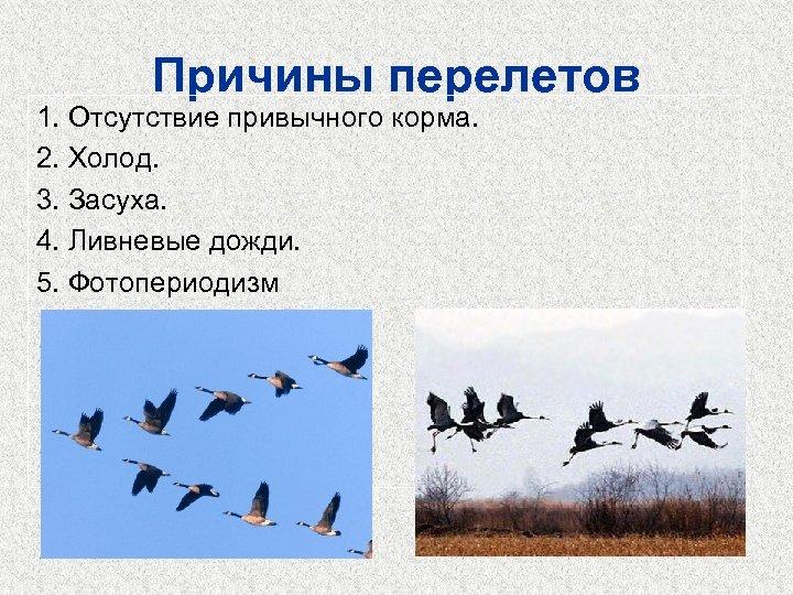 Причины перелетов 1. Отсутствие привычного корма. 2. Холод. 3. Засуха. 4. Ливневые дожди. 5.