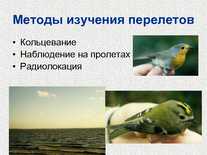 Методы изучения перелетов • Кольцевание • Наблюдение на пролетах • Радиолокация