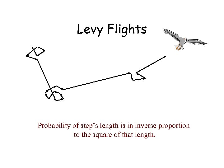 Levy Flights Probability of step's length is in inverse proportion to the square of