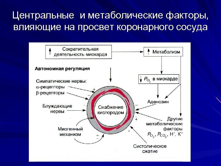Центральные и метаболические факторы, влияющие на просвет коронарного сосуда