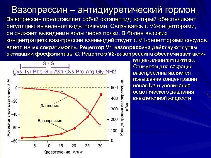 Вазопрессин – антидиуретический гормон Вазопрессин представляет собой октапептид, который обеспечивает регуляцию выведения воды почками.