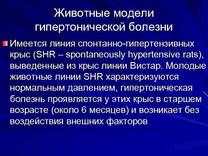 Животные модели гипертонической болезни Имеется линия спонтанно-гипертензивных крыс (SHR – spontaneously hypertensive rats), выведенные
