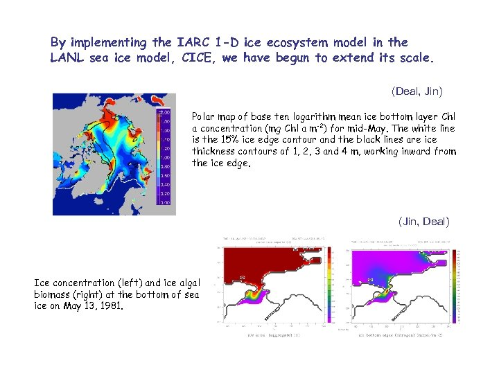 By implementing the IARC 1 -D ice ecosystem model in the LANL sea ice