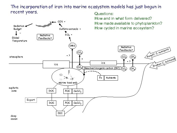 The incorporation of iron into marine ecosystem models has just begun in recent years.