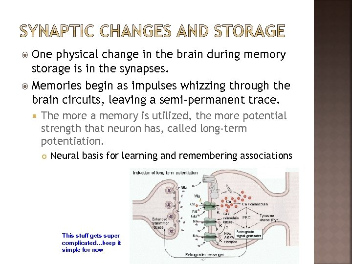 One physical change in the brain during memory storage is in the synapses. Memories