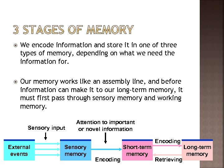 We encode information and store it in one of three types of memory,