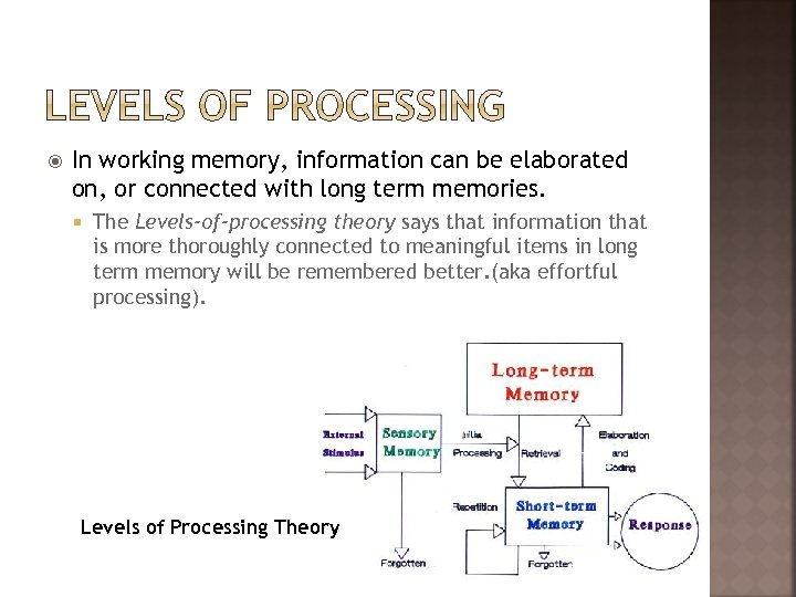 In working memory, information can be elaborated on, or connected with long term