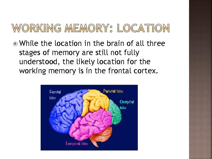 While the location in the brain of all three stages of memory are