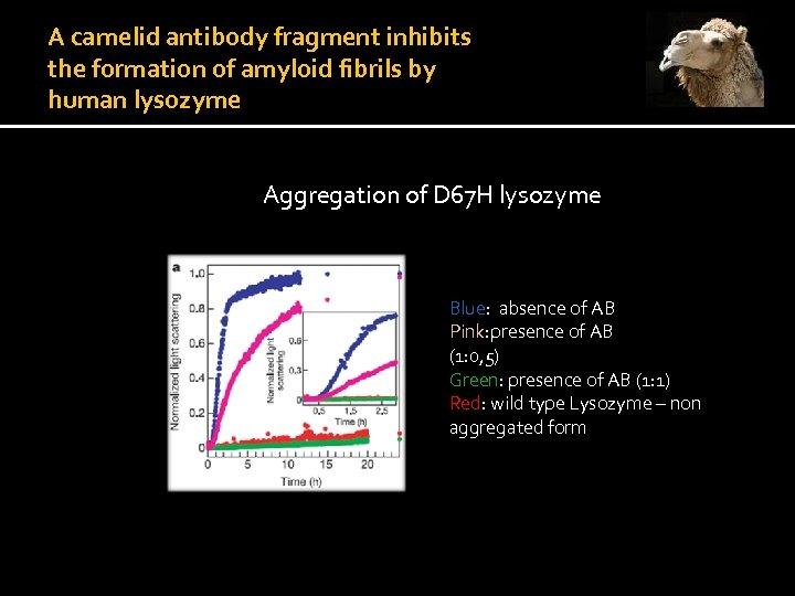 A camelid antibody fragment inhibits the formation of amyloid fibrils by human lysozyme VHH