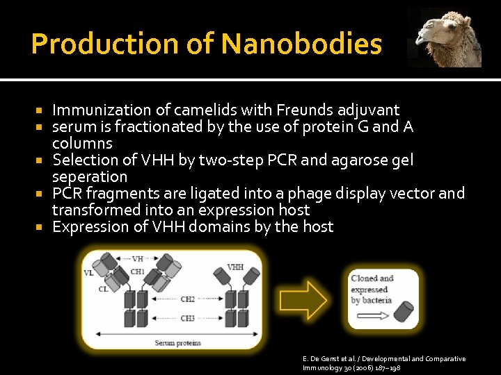 Production of Nanobodies Immunization of camelids with Freunds adjuvant serum is fractionated by the