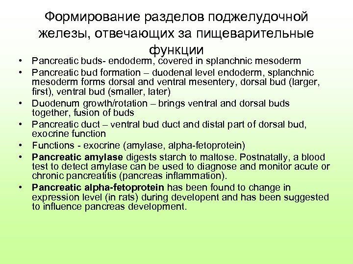 Формирование разделов поджелудочной железы, отвечающих за пищеварительные функции • Pancreatic buds- endoderm, covered in