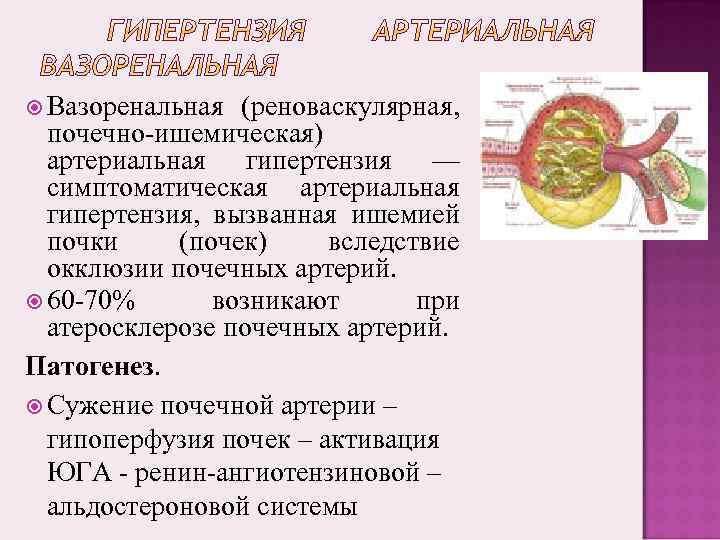 Вазоренальная (реноваскулярная, почечно-ишемическая) артериальная гипертензия — симптоматическая артериальная гипертензия, вызванная ишемией почки (почек)