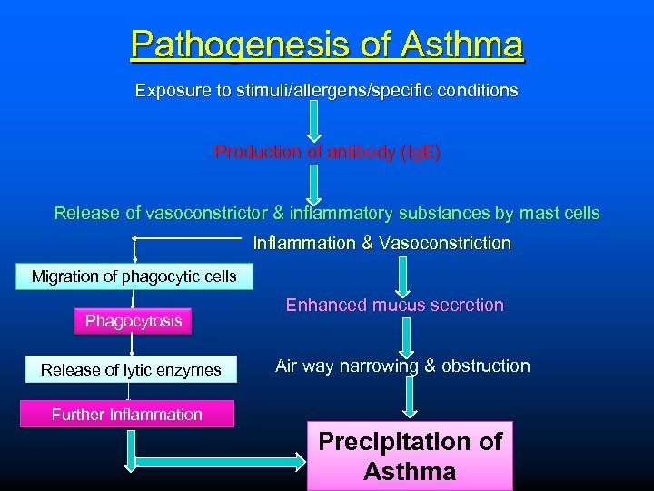 Pathogenesis of Asthma Exposure to stimuli/allergens/specific conditions Production of antibody (Ig. E) Release of