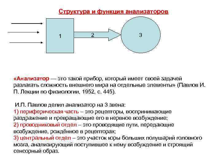Структура и функция анализаторов 1 2 3 «Анализатор — это такой прибор, который имеет