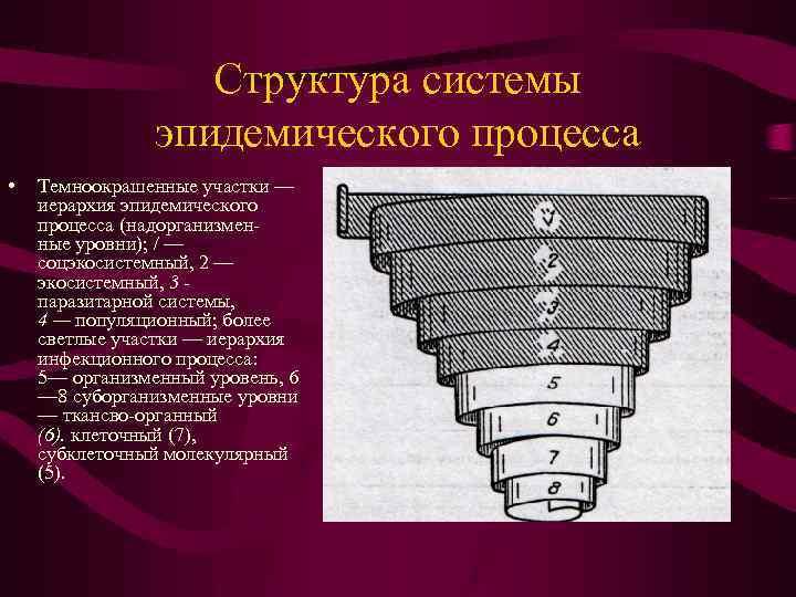 Структура системы эпидемического процесса • Темноокрашенные участки — иерархия эпидемического процесса (надорганизменные уровни); /