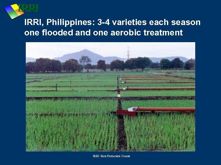 IRRI, Philippines: 3 -4 varieties each season one flooded and one aerobic treatment IRRI: