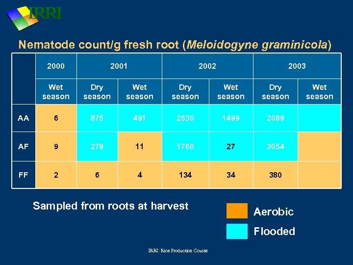 Nematode count/g fresh root (Meloidogyne graminicola) 2000 2001 2002 2003 Wet season Dry season
