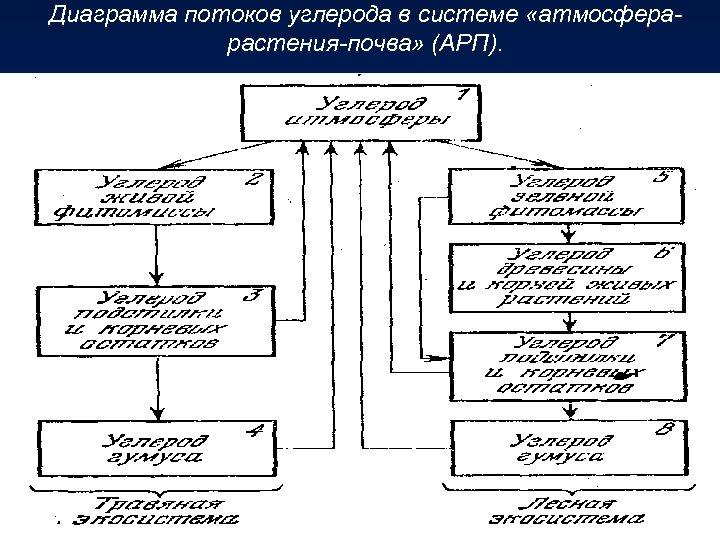 Диаграмма потоков углерода в системе «атмосферарастения-почва» (АРП).