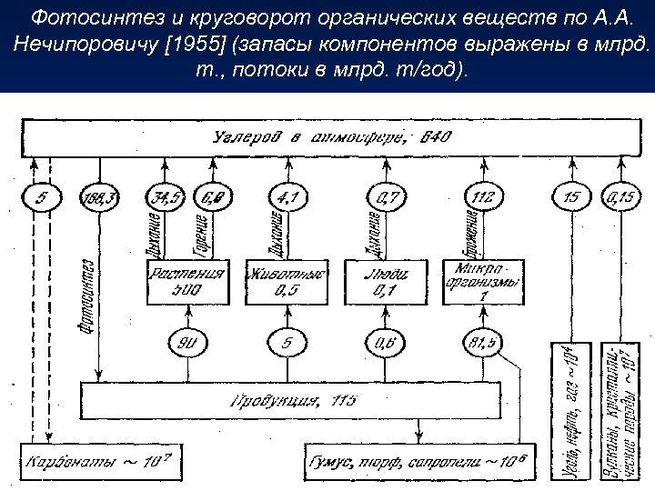 Фотосинтез и круговорот органических веществ по А. А. Нечипоровичу [1955] (запасы компонентов выражены в