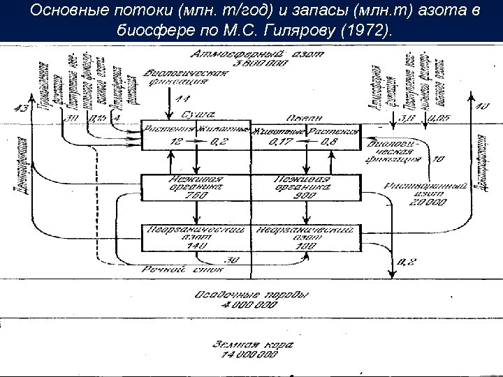 Основные потоки (млн. т/год) и запасы (млн. т) азота в биосфере по М. С.