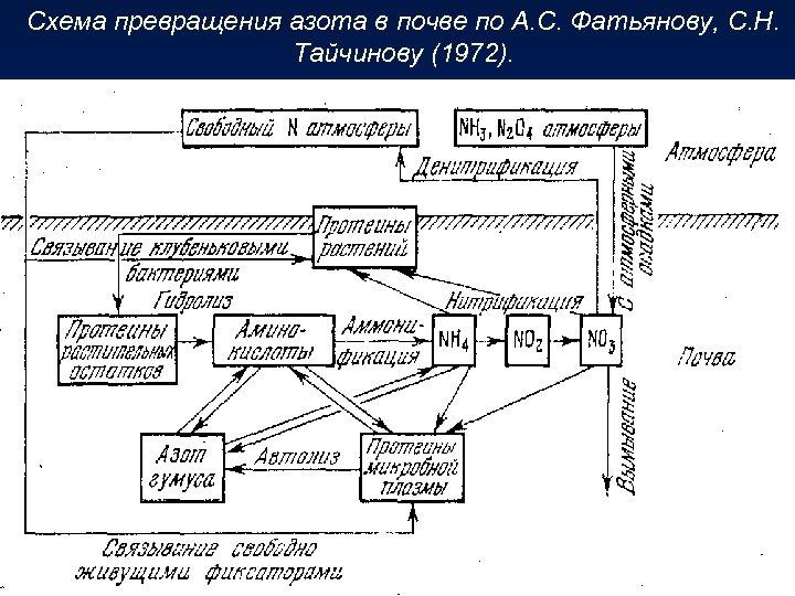 Схема превращения азота в почве по А. С. Фатьянову, С. Н. Тайчинову (1972).