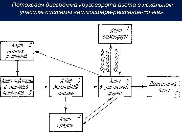 Потоковая диаграмма круговорота азота в локальном участке системы «атмосфера-растение-почва» .