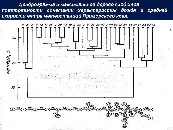 Дендрограмма и максимальное дерево сходства повторяемости сочетаний характеристик дождя и средней скорости ветра метеостанций