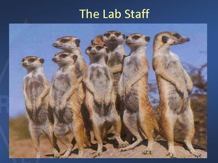 The Lab Staff