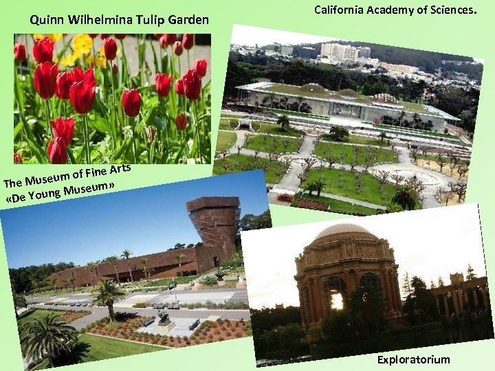 Quinn Wilhelmina Tulip Garden California Academy of Sciences. Arts m of Fine u The