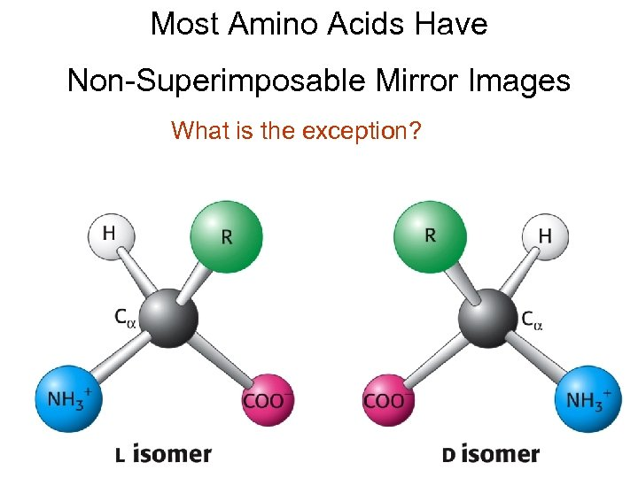 Most Amino Acids Have Non-Superimposable Mirror Images What is the exception?