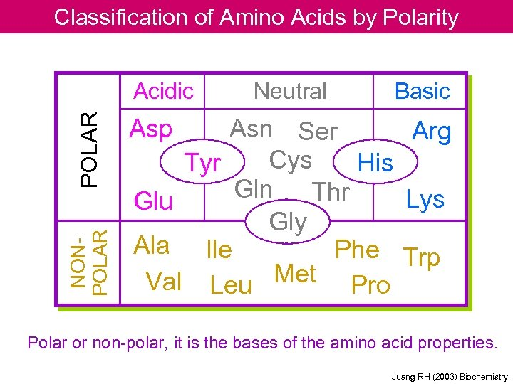 Classification of Amino Acids by Polarity NONPOLAR Acidic Neutral Basic Asp Asn Ser Arg