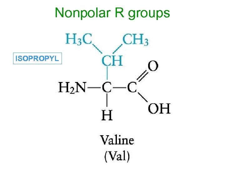 Nonpolar R groups ISOPROPYL