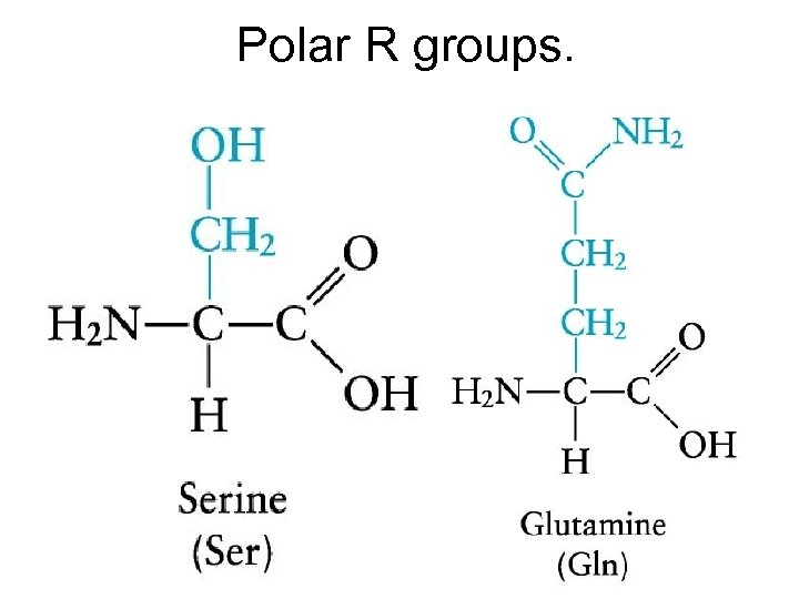 Polar R groups.
