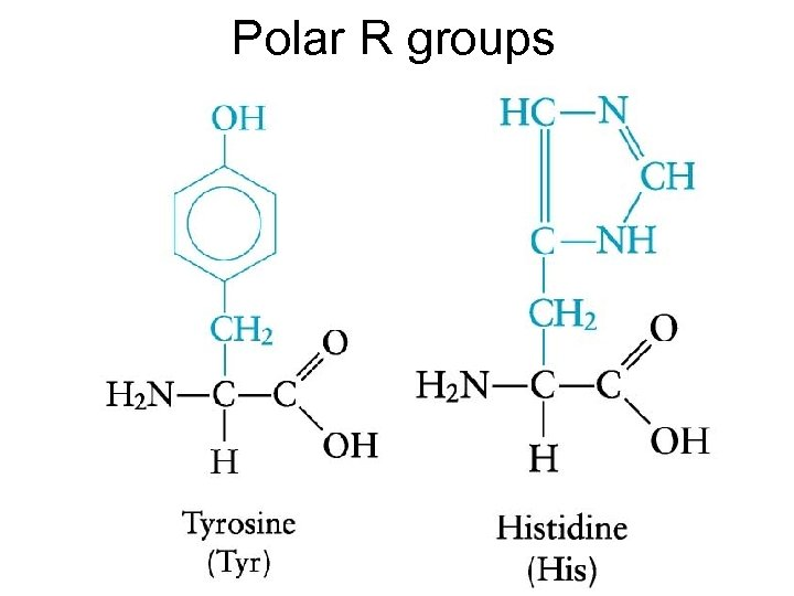 Polar R groups