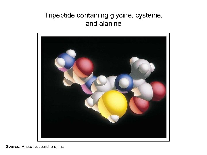 Tripeptide containing glycine, cysteine, and alanine Source: Photo Researchers, Inc.