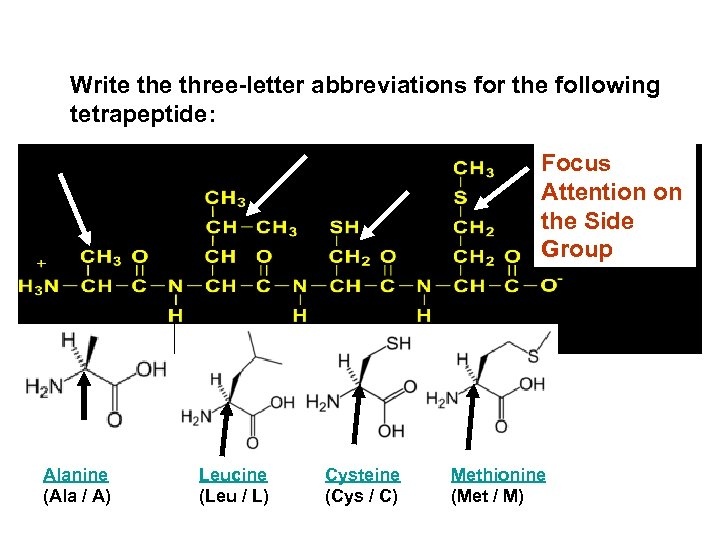 Write three-letter abbreviations for the following tetrapeptide: Focus Attention on the Side Group Alanine