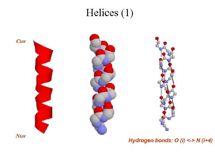 Helices (1) Cter Nter Hydrogen bonds: O (i) <-> N (i+4)