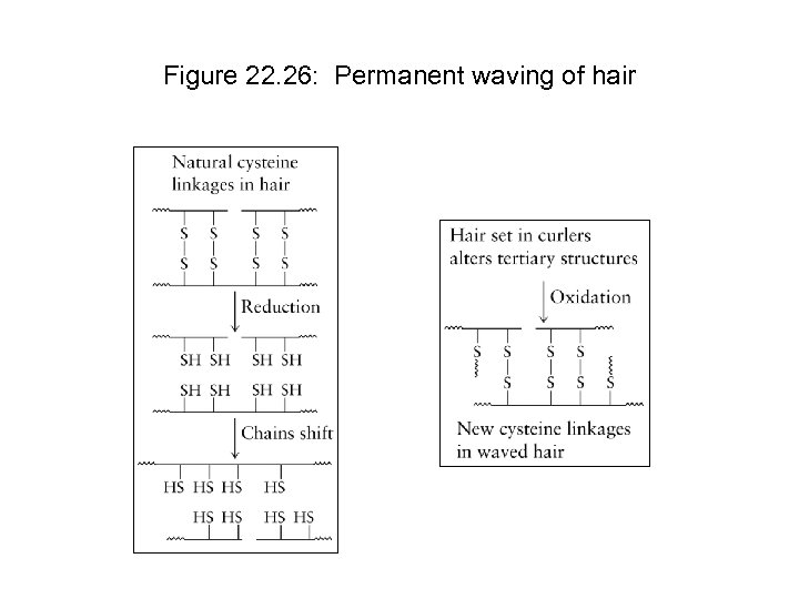 Figure 22. 26: Permanent waving of hair