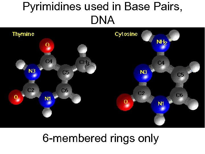 Pyrimidines used in Base Pairs, DNA 6 -membered rings only