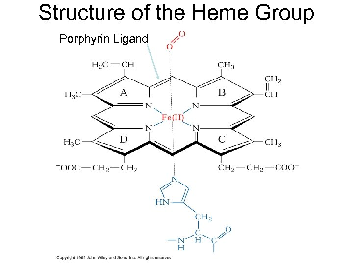 Structure of the Heme Group Porphyrin Ligand